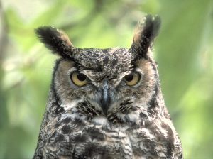 "Grammar Owl says, ""Whom?"" not ""Who?"""