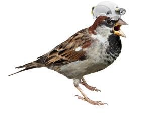 Sparrow Spelunker